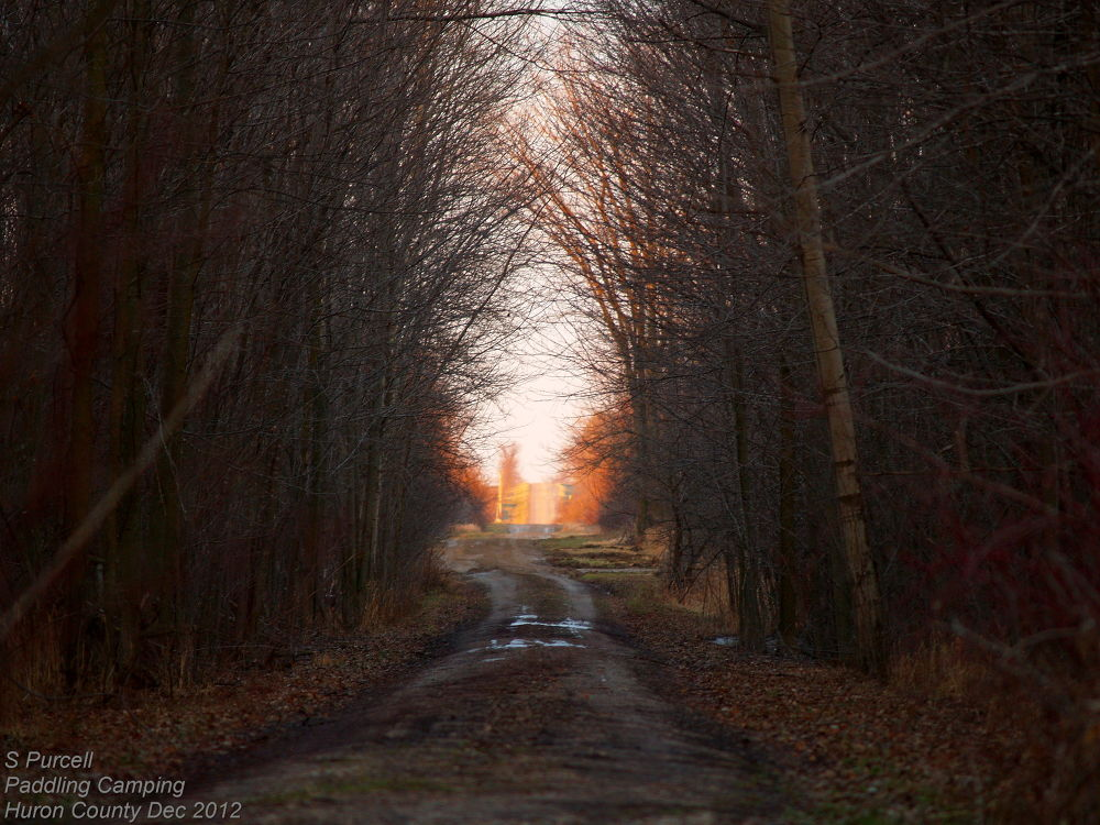 Natures Tunnels by Sean Purcell