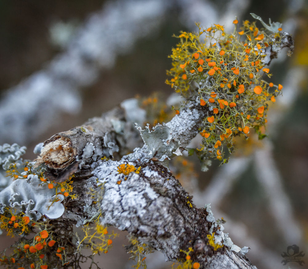 Mossy Oak by greasemanhimself
