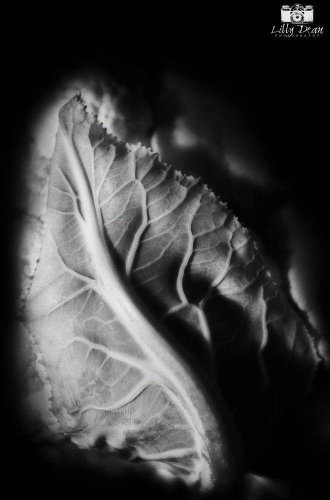 cauliflower by KarenShell