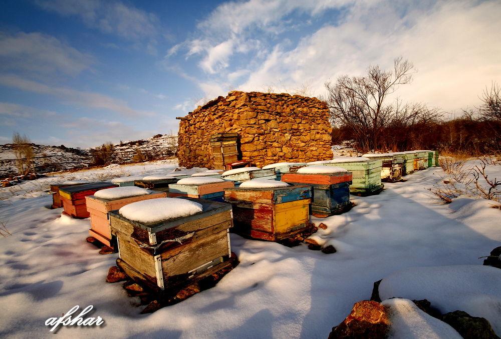 _Sleeping bees by Ayyoubafsharinezhad