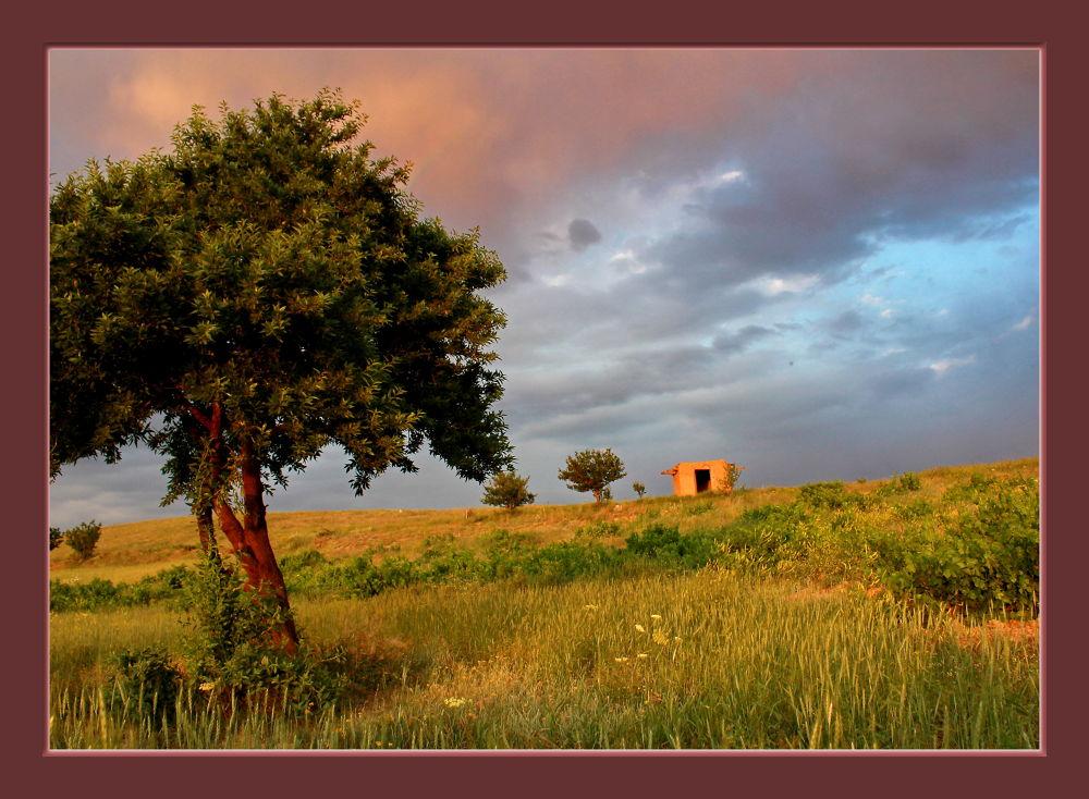 Our Garden by Ayyoubafsharinezhad