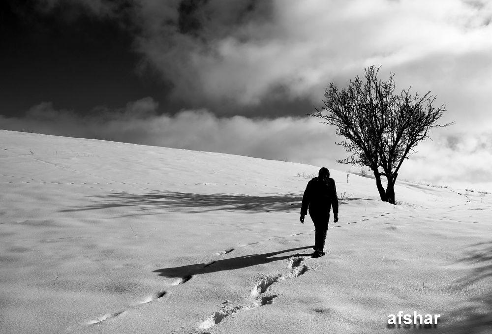 IMG_3284 by Ayyoubafsharinezhad