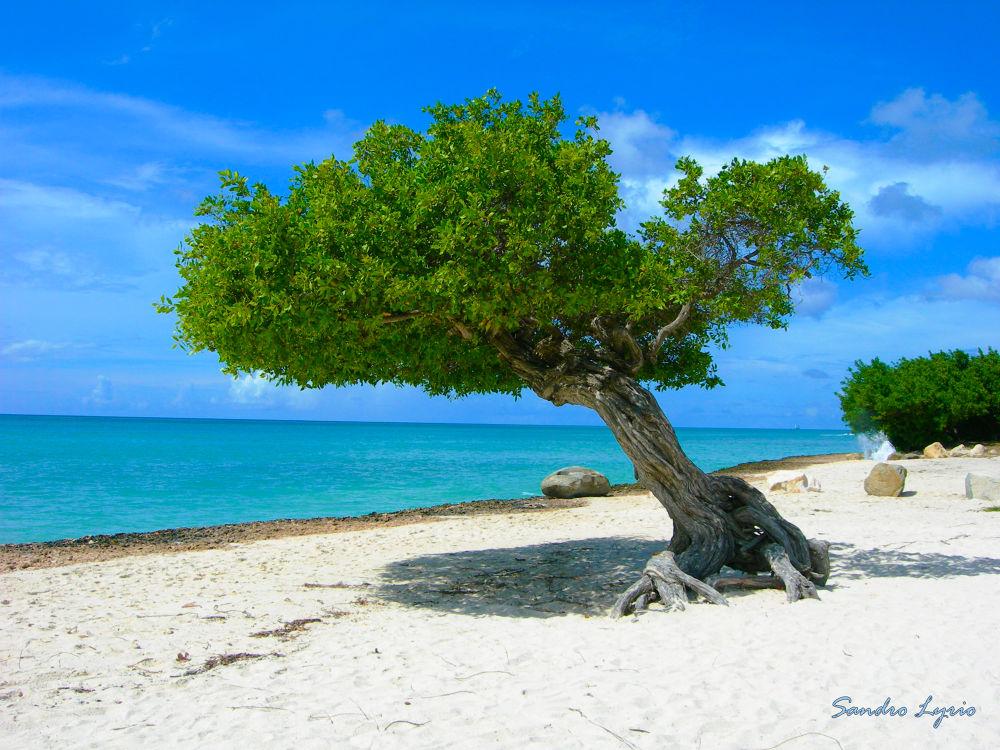 Aruba by SandroLyrio