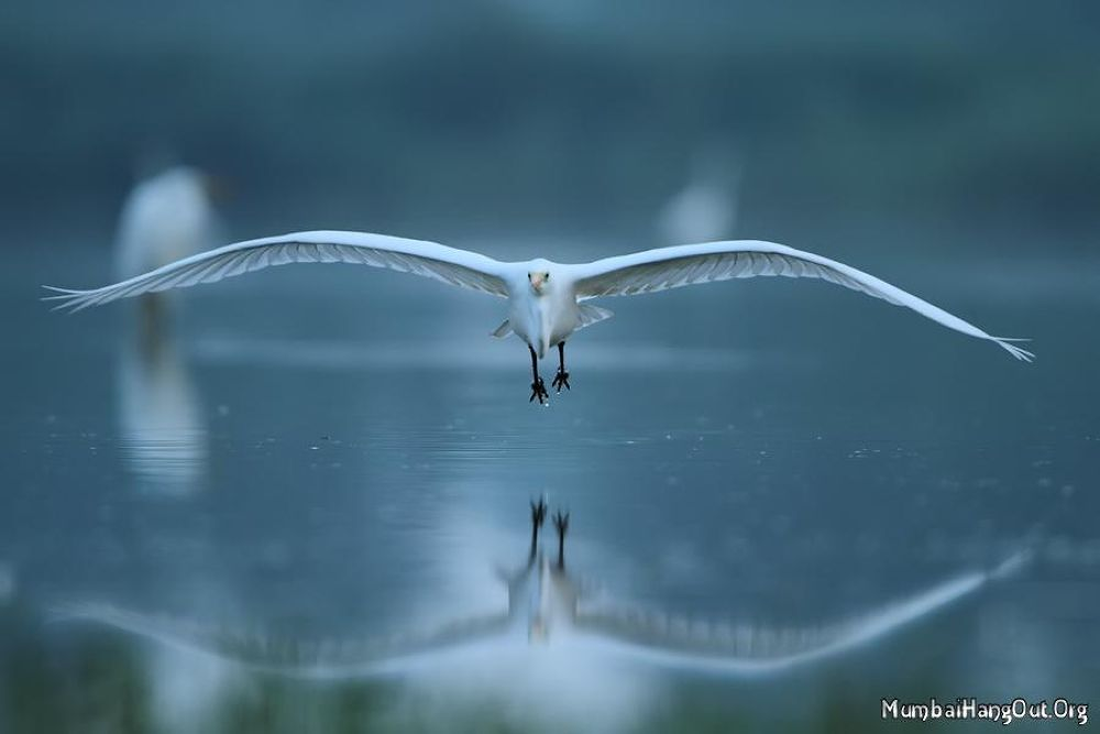 The strength of the wing by Tatsuko Sukotjo