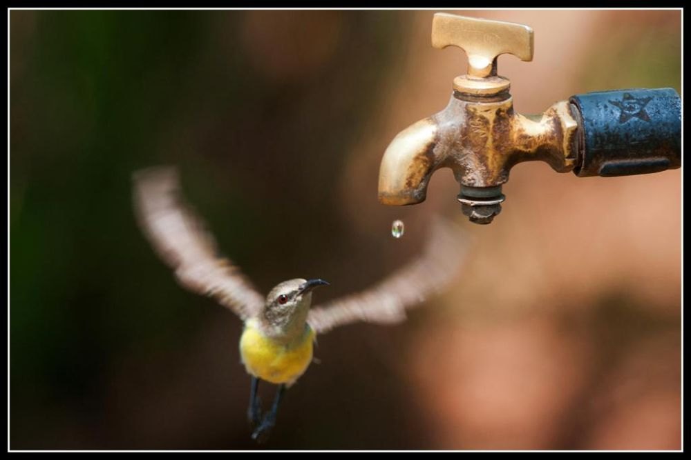4346-sunbird approching for water  by AJAYSHAH