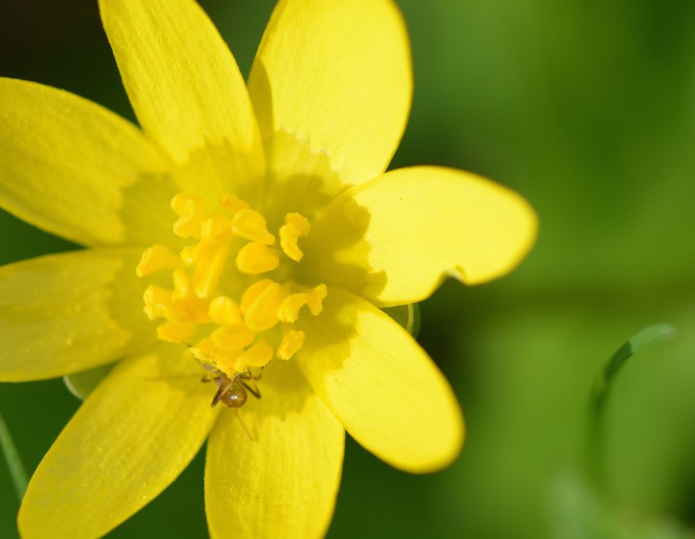 Buttercup by Dale Hobson