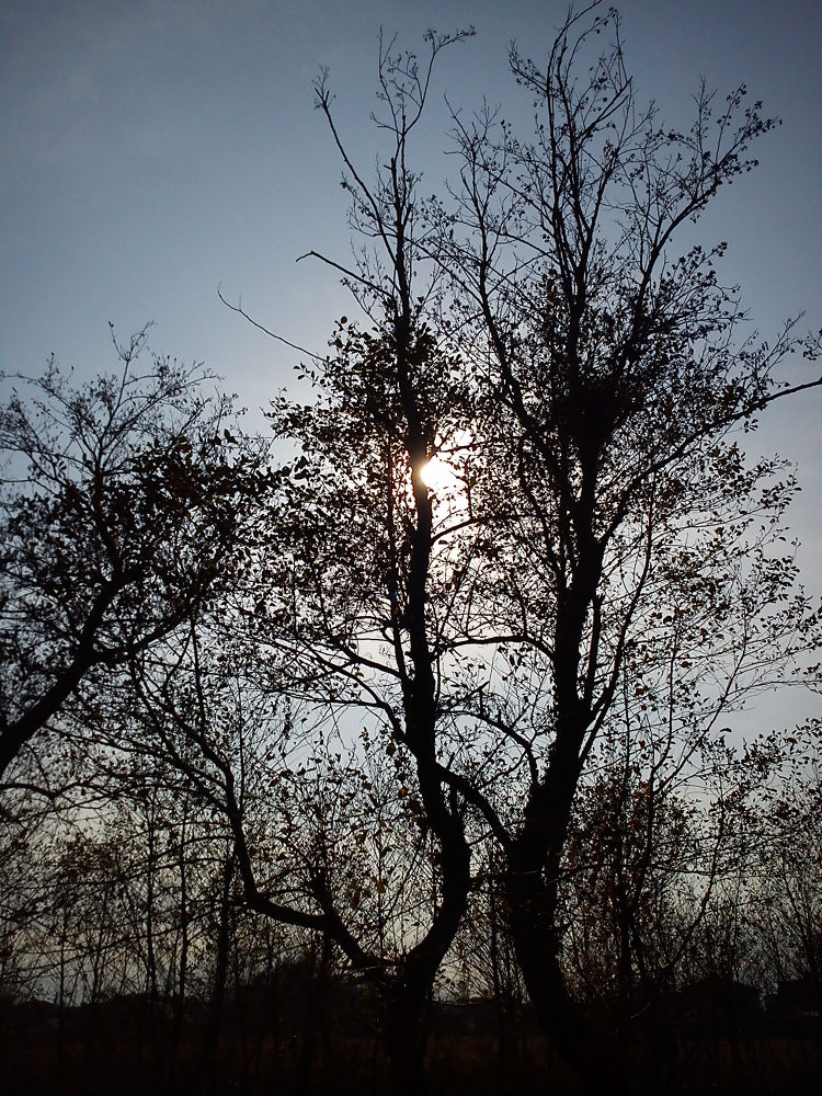 autumn trees by Navid khorrami