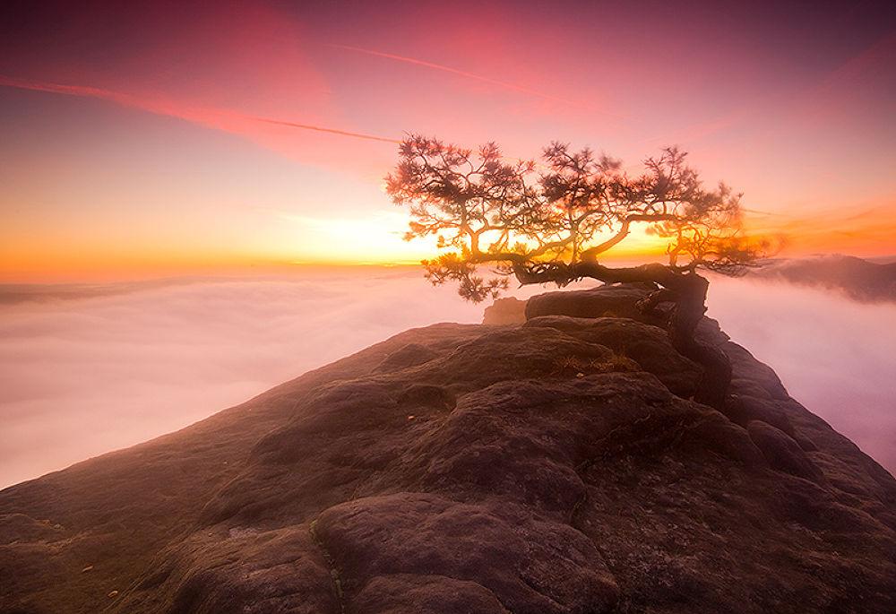 Tree of life by mjagiellicz