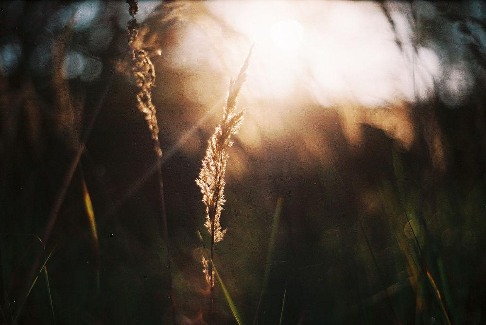 Light by Kaja Potoniec