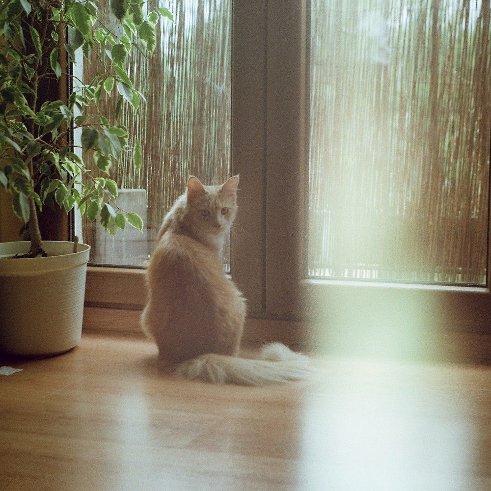 Cat by Kaja Potoniec