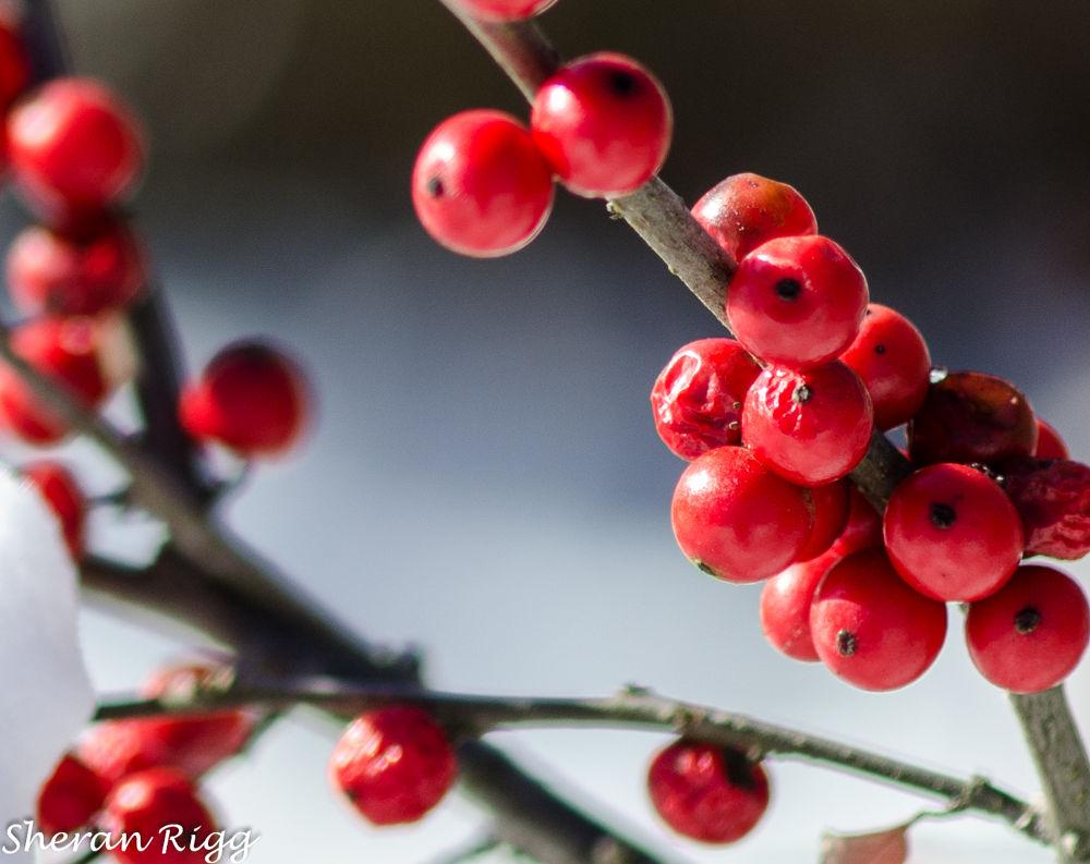 Red by SheranRigg