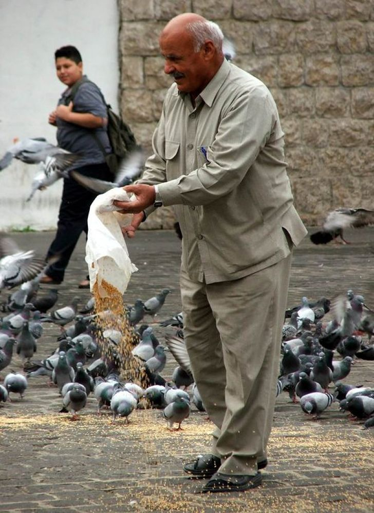 Feeding the pigeons by unionedicolorire