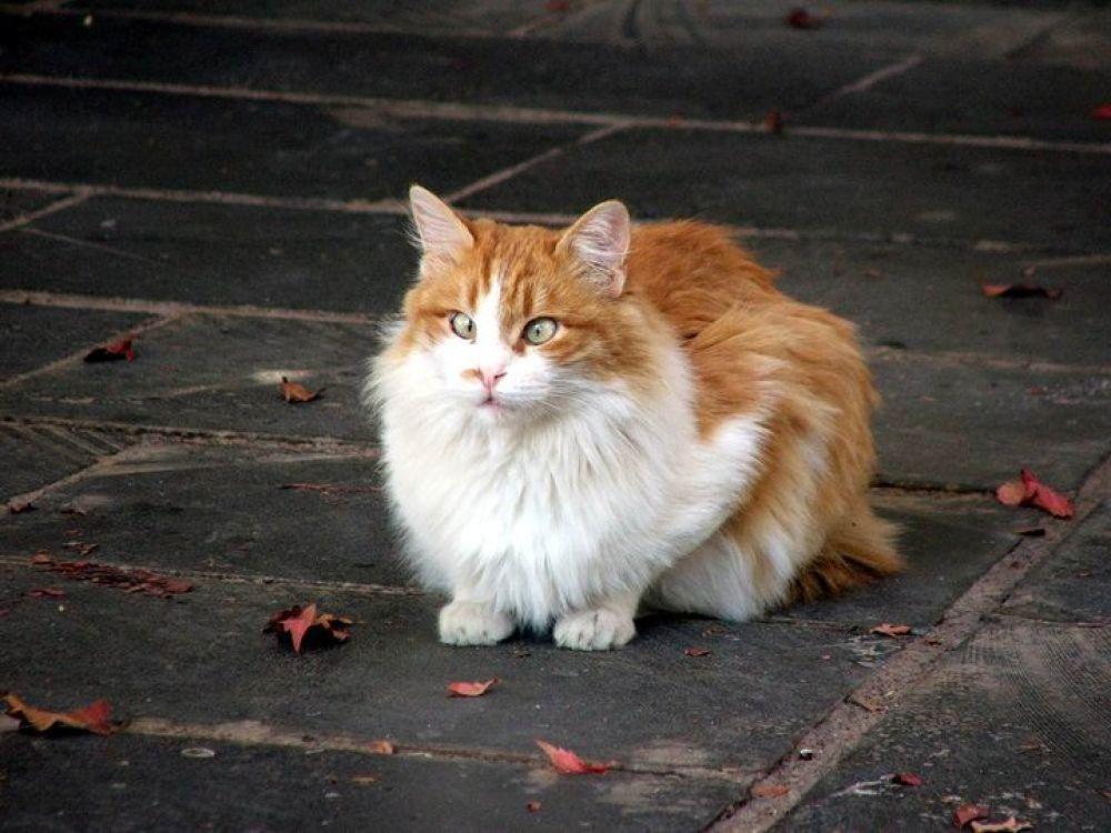 autumn cat by unionedicolorire