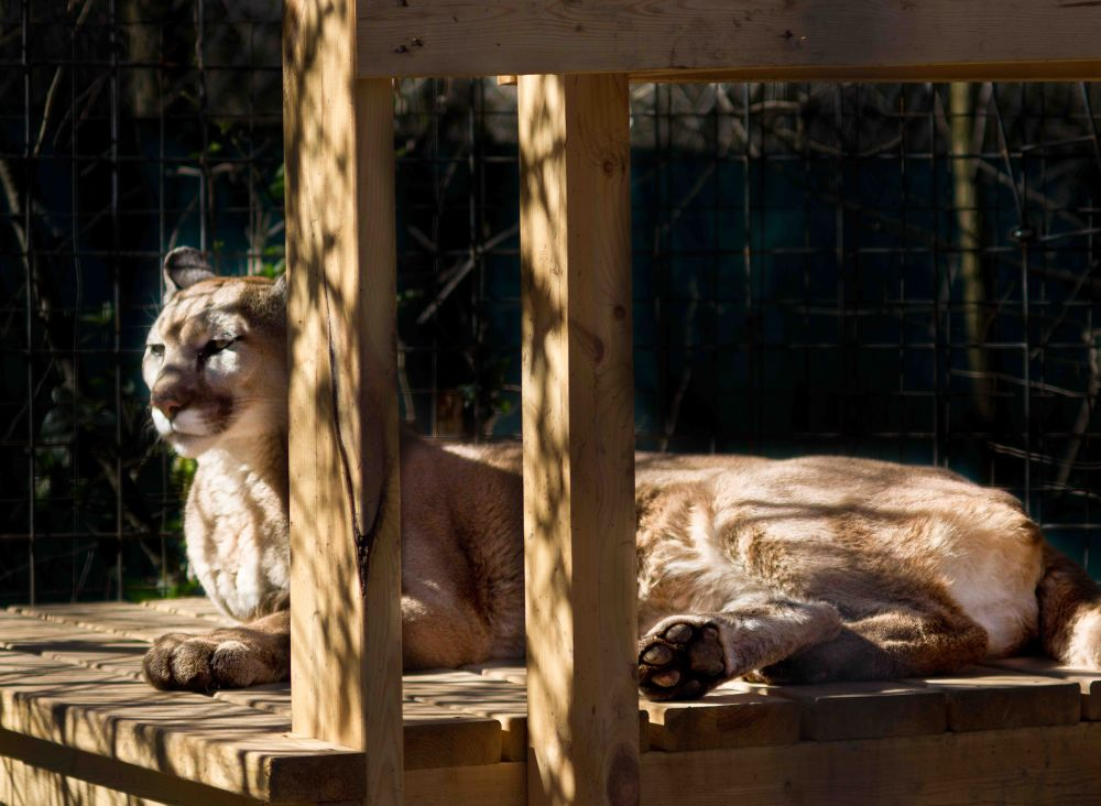 Exotic Feline-2 by David W. Scott
