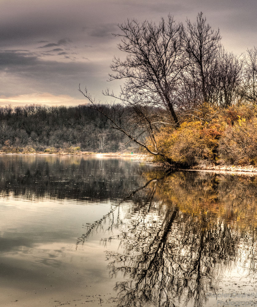 Tree island in the lake by David W. Scott