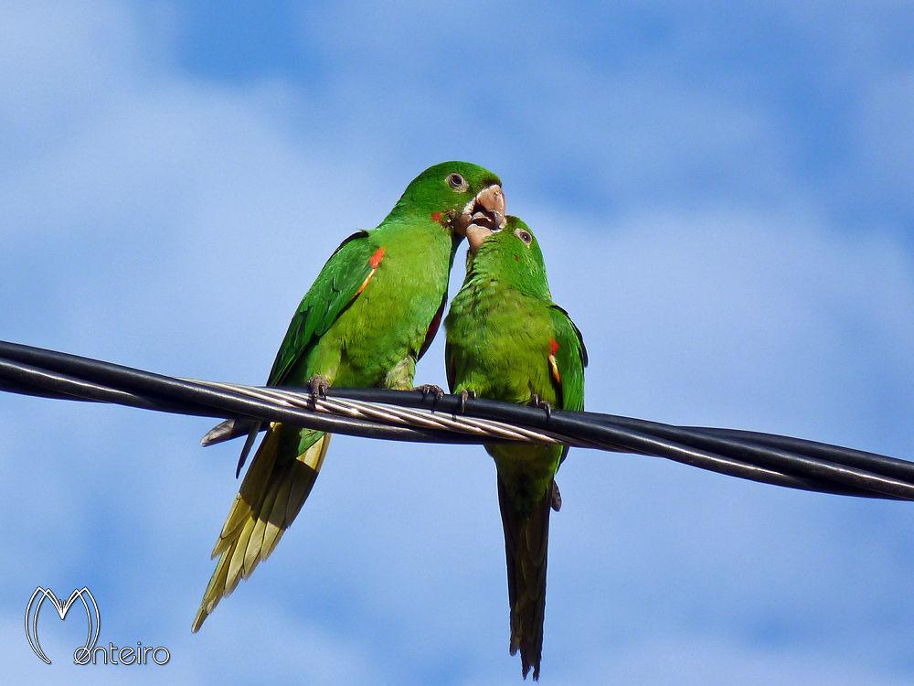 Photo in Animal #parakeet #bird