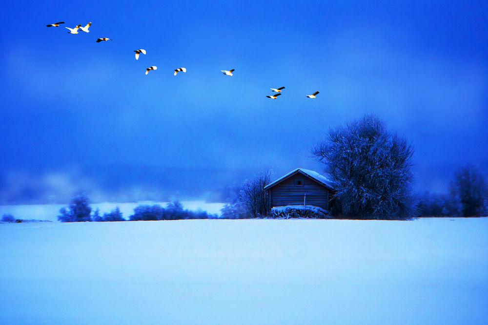 winter wind by ck khui