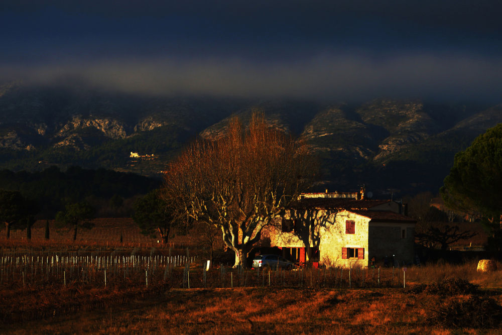 morning in the farm by ck khui