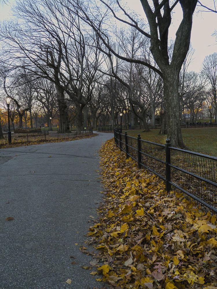 Central Park by Kalau