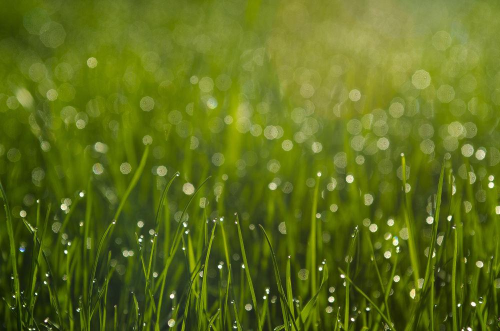 Grass by Łukasz Leksowski
