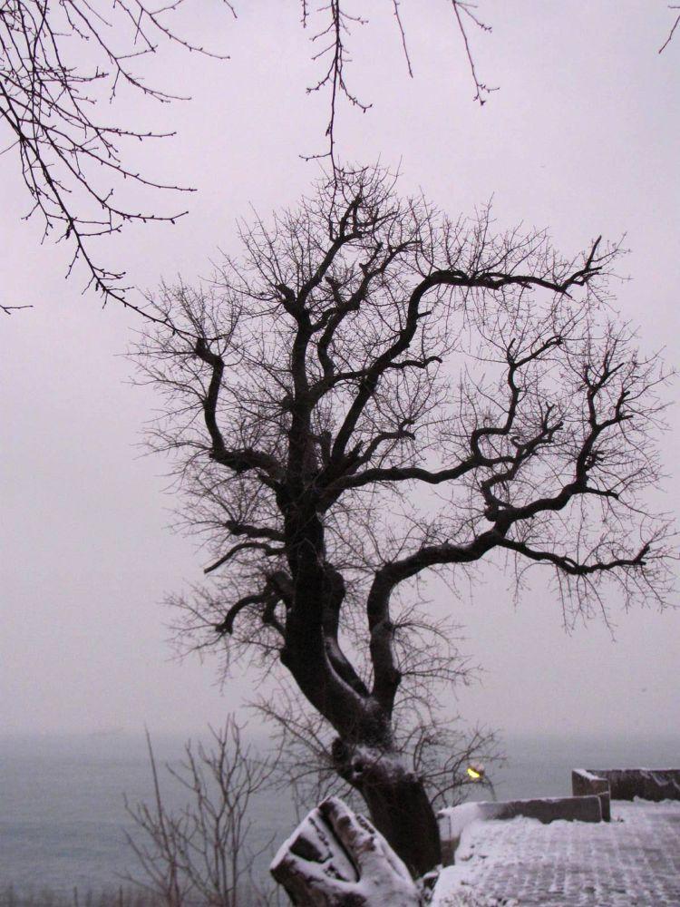kış IMG_5552 by atilaaktürk