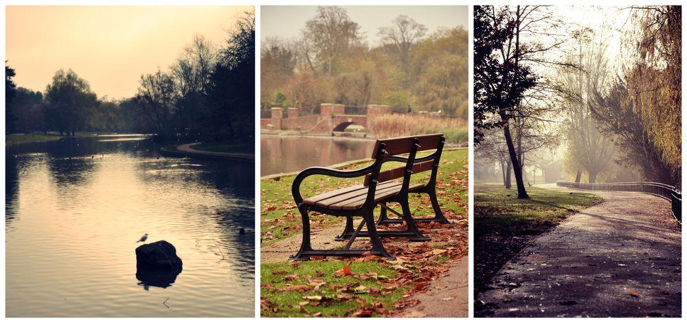 Autumn in UK. by Mariusz Zych