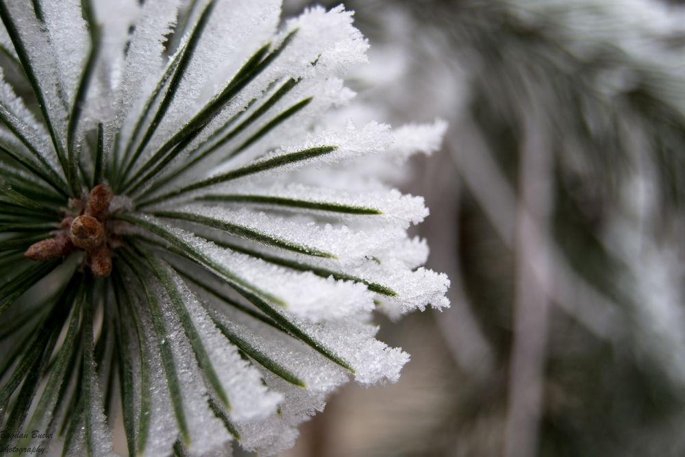 snow by bucurbogdan7