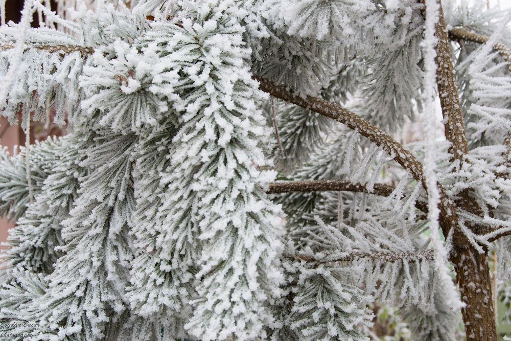 winter by bucurbogdan7