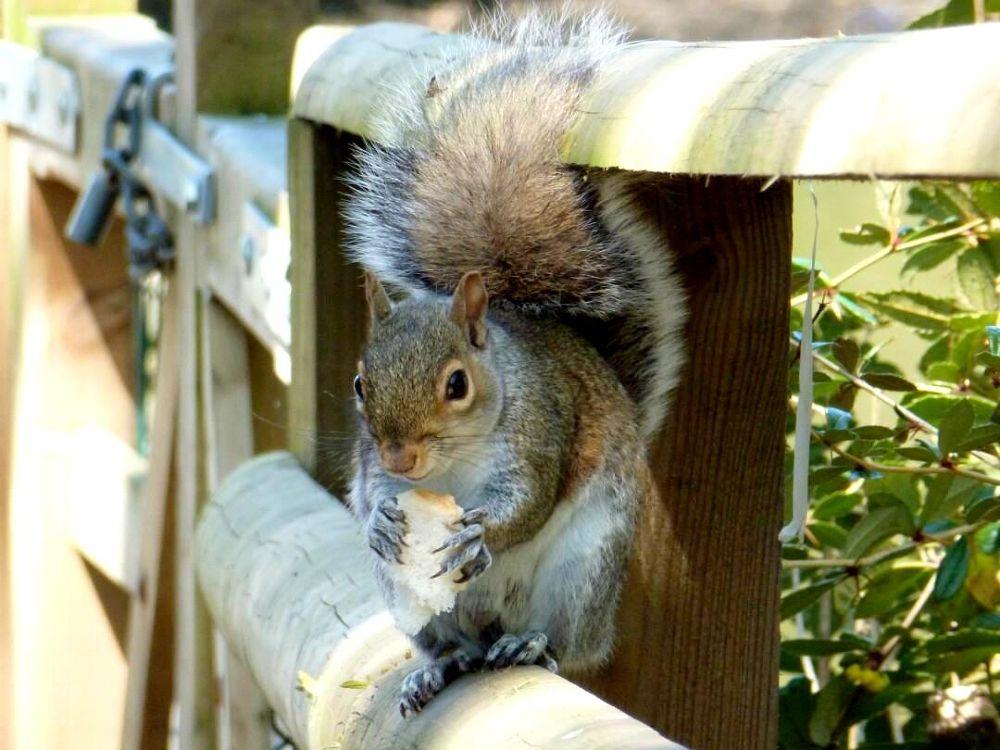 Photo in Animal #squirrel #animal #cute #wildlife #nature