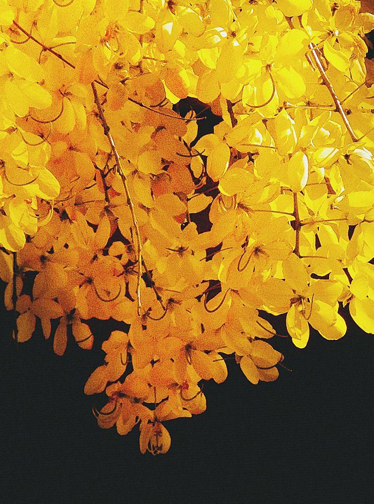 Photo in Nature #photography #photo #foto #fotografia #black #light #shadows #nature #flower