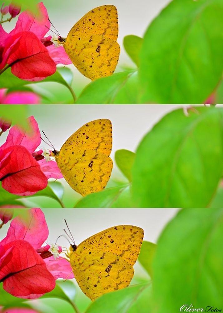 borboleta by Tiago Oliver