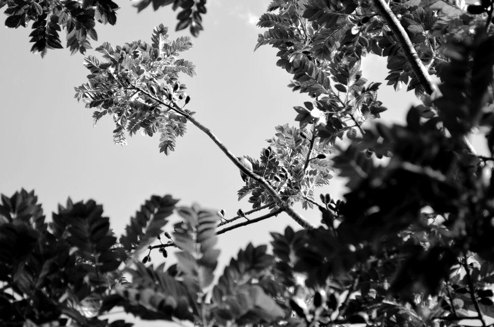 Cadê o passarinho?  by gusthavoyoshimatsu