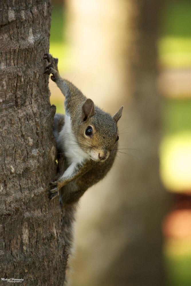 Squirrel by mikehernandez2591