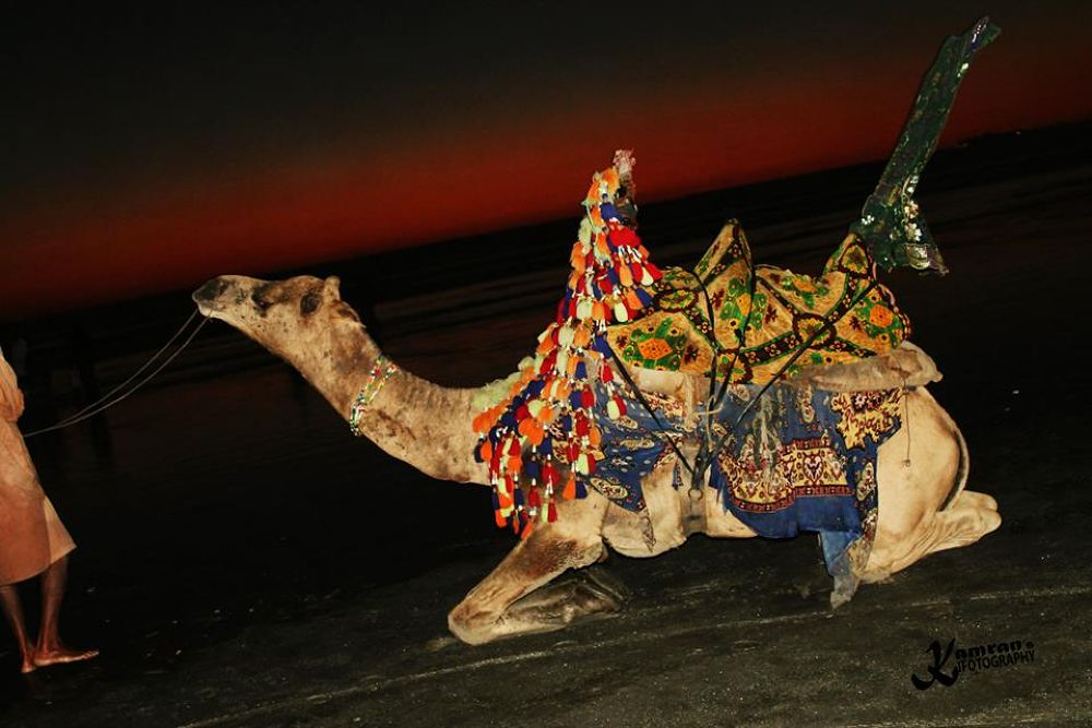 Resting Camel at Karachi Sea View by xamran
