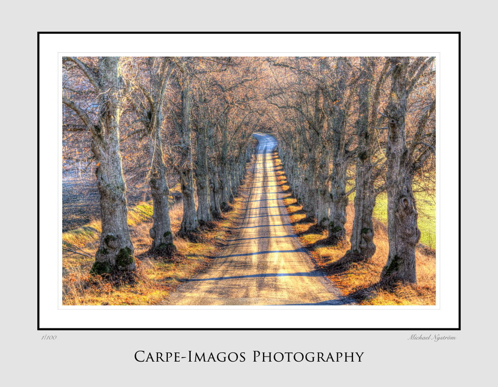 Swedish autum by Carpe-Imagos Photography