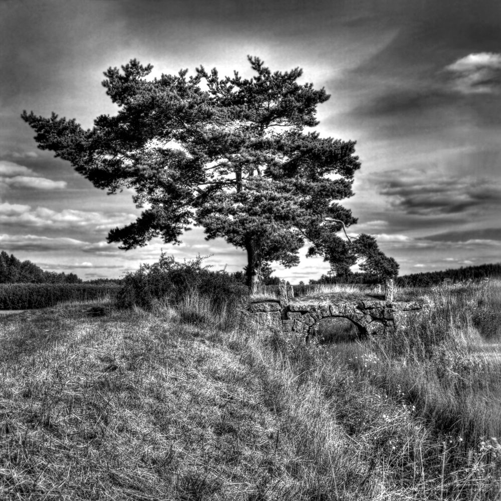 The old tree by Carpe-Imagos Photography