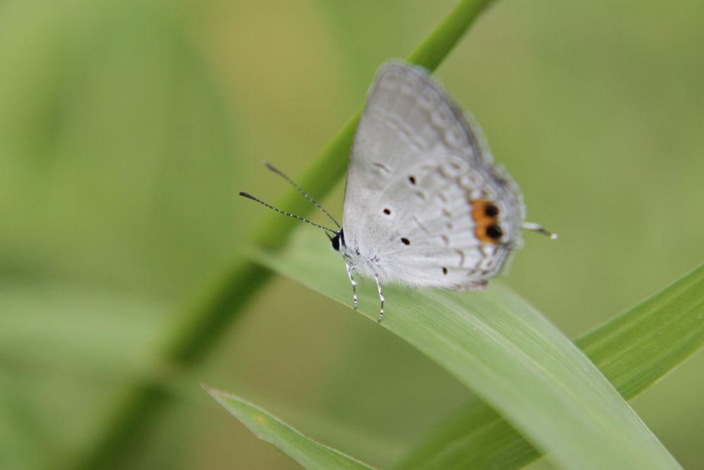 WHITE BUTTERFLY by rizkyydirinya