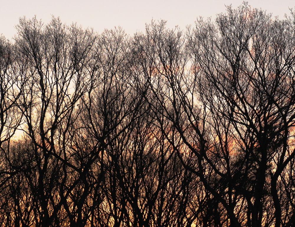 Forest at dusk by shigeo yukizawa