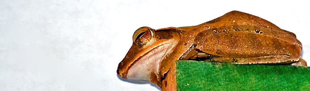Photo in Animal #frog #tree #wall #rest