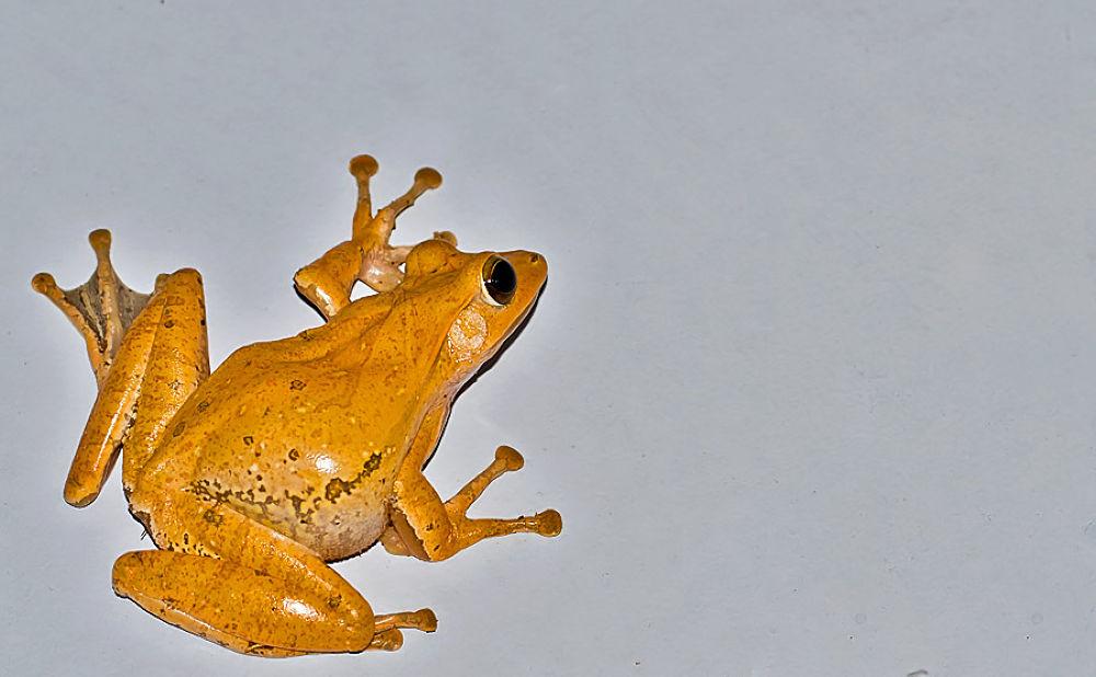 Photo in Animal #frog #wall #yellow #tree