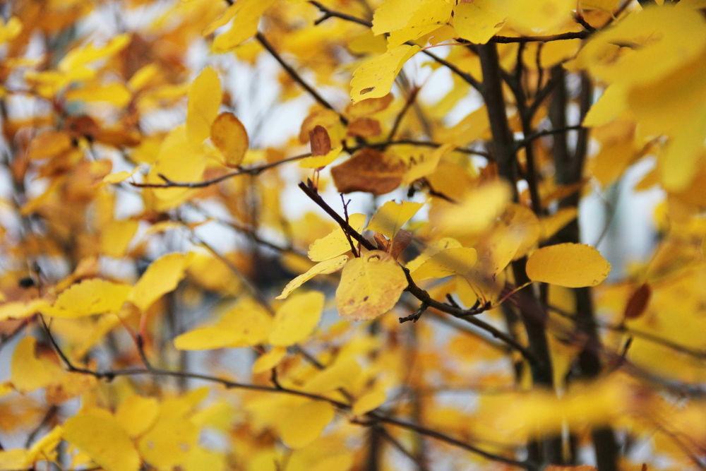 Fall 2013 by Tómas Rekstad