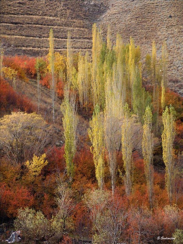 Autumn in the Valley by soheyl sadinejad