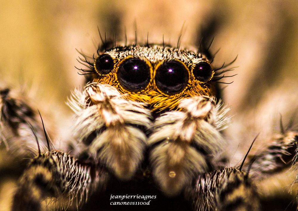 Look into My Eyes by jeanpierrieagnes
