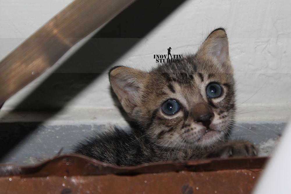 Kitten by Usama Moin