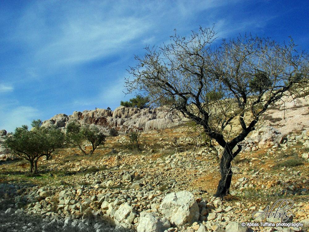 the tree can touch the sky by AbbasTuffaha