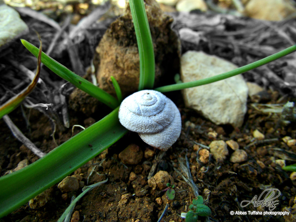 Photo in Nature #herb #white #green #nature #macro #rock #small
