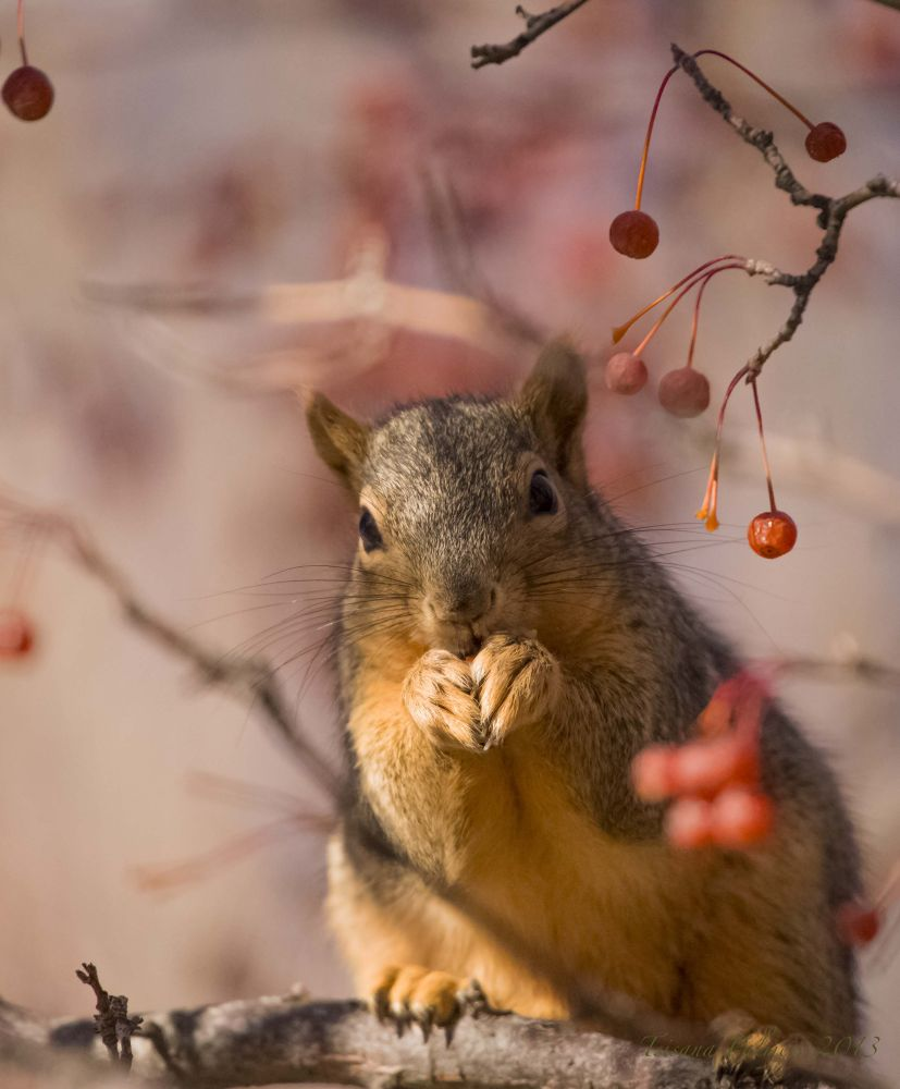 Squirrel by Palmer