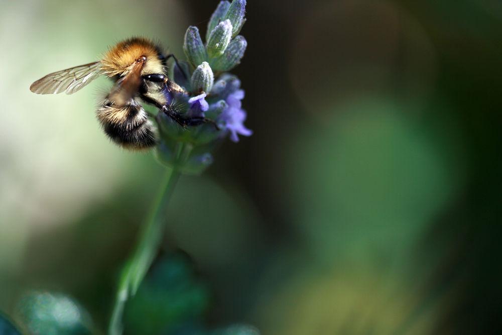 Beeautiful by Adrian Farris