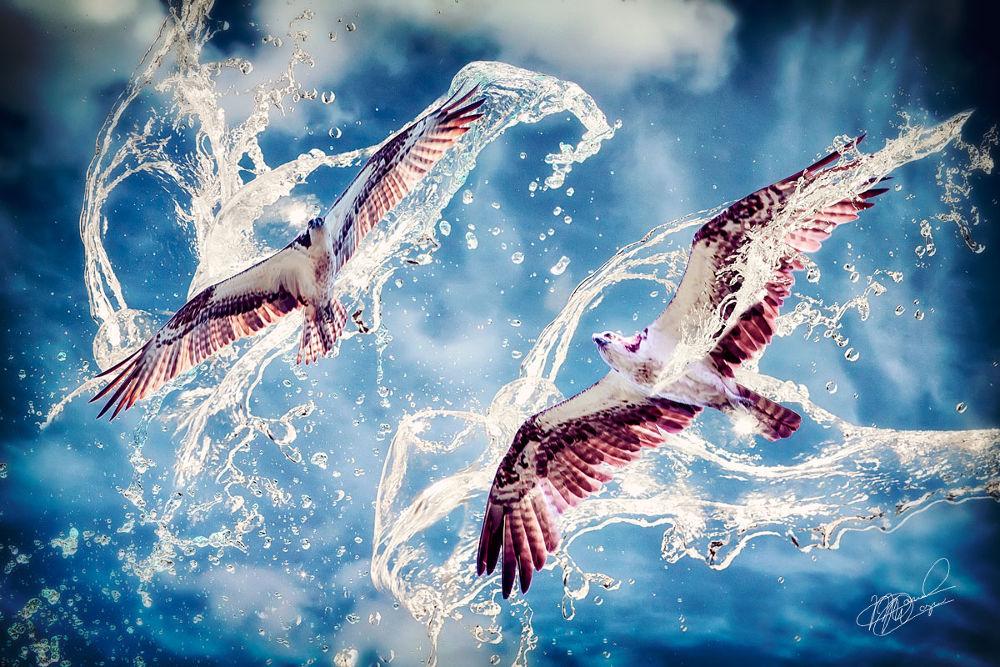 Water Hawks by moyaph
