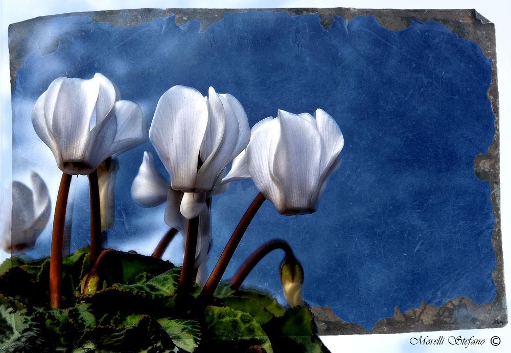 812 - I miei fiori.... by Stefano